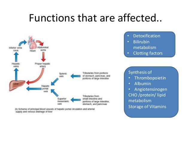 alcoholic hepatitis corticosteroids