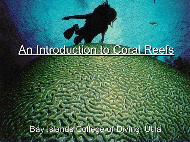 an introduction to the nature of coral reefs Coral reefs could be considered the poster child of nature-based tourism people come specifically to visit the reefs themselves, to swim over shimmering gardens of coral amongst hordes of.