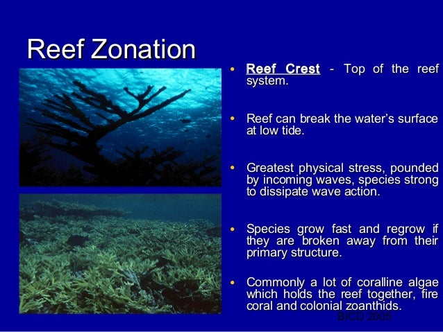 an introduction to the nature of coral reefs Coral reefs: a very short introduction (very short introductions)  here you can discover the best coral reefs ecosystems in amazon  ‹ nature & ecology.