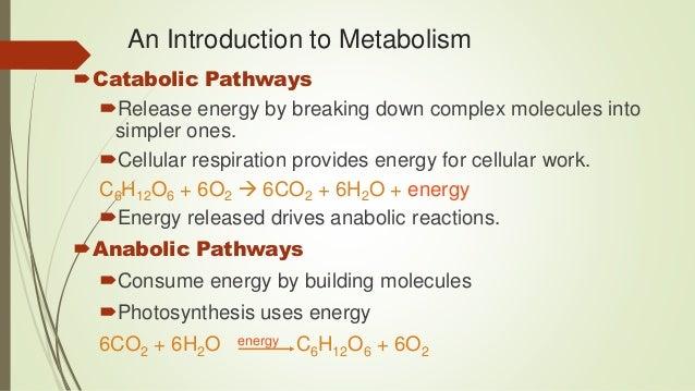 anabolic reactions define