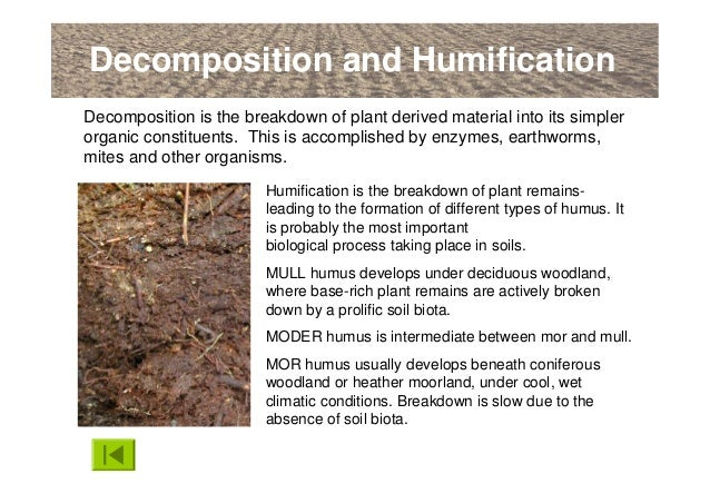 An introduction to soils soil formation and terminology for Origin and formation of soil