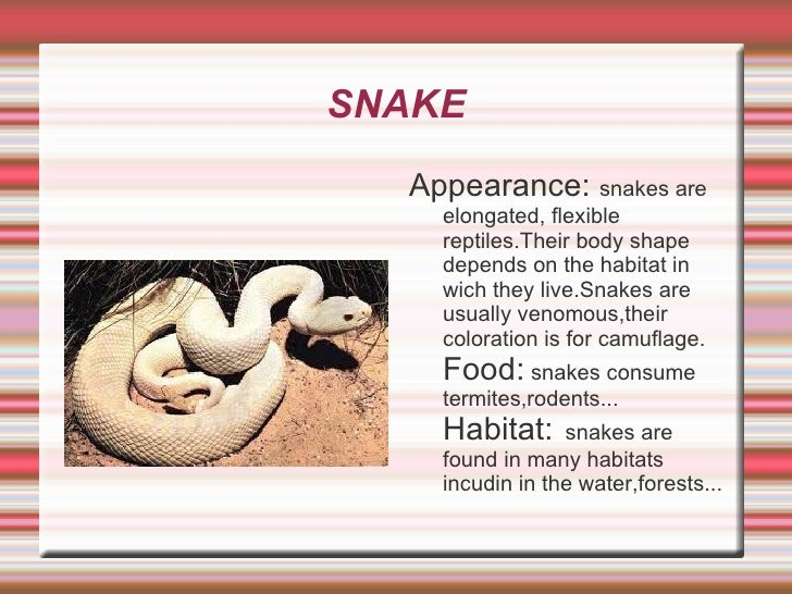SNAKE <ul>Appearance:  snakes are elongated, flexible reptiles.Their body shape depends on the habitat in wich they live.S...