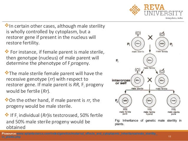 extranuclear inheritance biology discussion