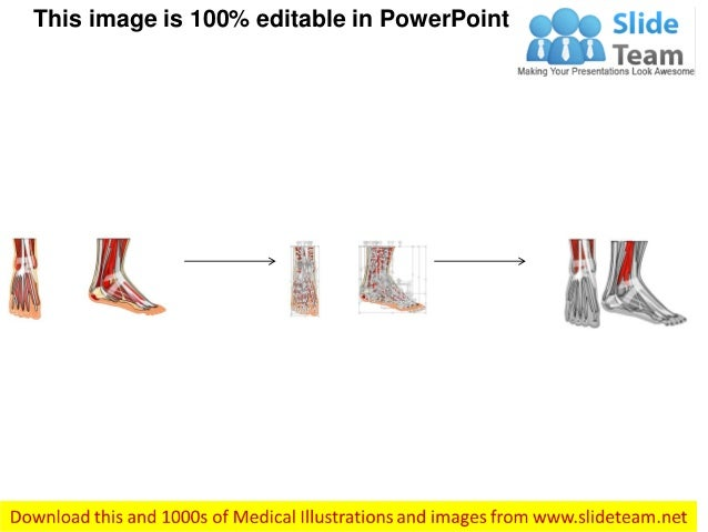 Ankle Anterior View Medical Images For Power Point