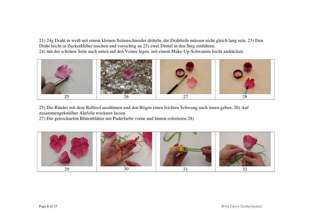 Pfingstrosen Trocknen kostenlose anleitung zuckerblumen pfingstrosen caros zuckerzaub