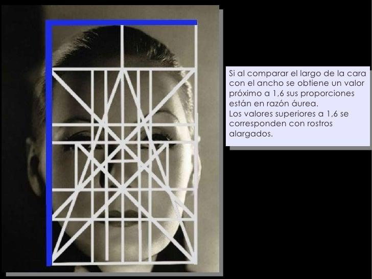 Si al comparar el largo de la cara con el ancho se obtiene un valor próximo a 1,6 sus proporciones están en razón áurea. L...