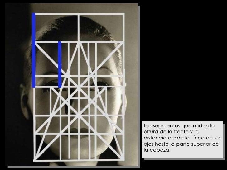 Los segmentos que miden la altura de la frente y la distancia desde la  línea de los ojos hasta la parte superior de la ca...