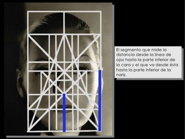 El segmento que mide la distancia desde la línea de ojos hasta la parte inferior de la cara y el que va desde ésta hasta l...