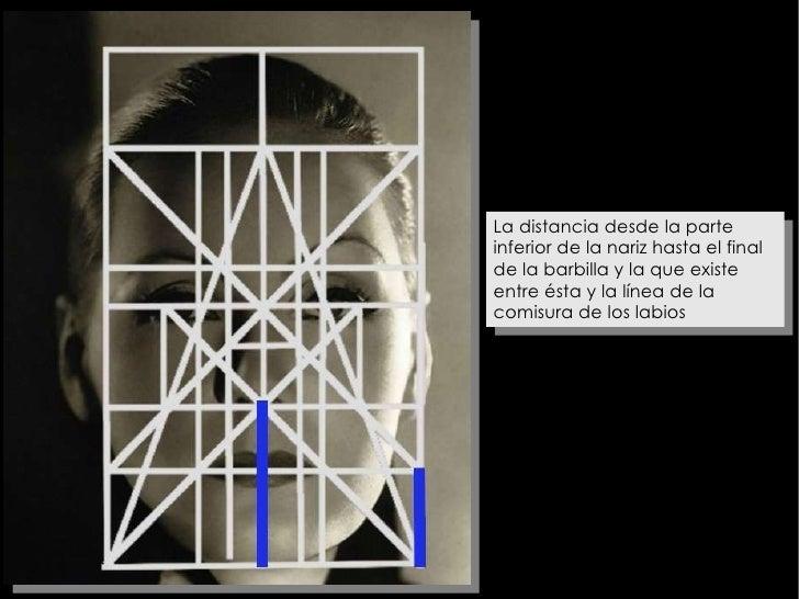 La distancia desde la parte inferior de la nariz hasta el final de la barbilla y la que existe entre ésta y la línea de la...