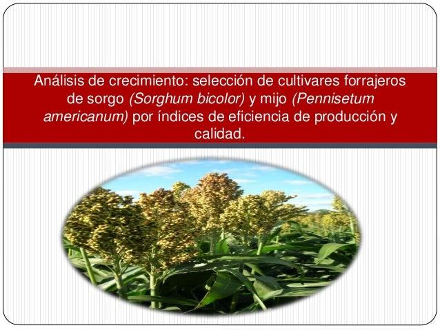 Análisis de crecimiento: selección de cultivares forrajeros de sorgo (Sorghum bicolor) y mijo (Pennisetum americanum) por ...
