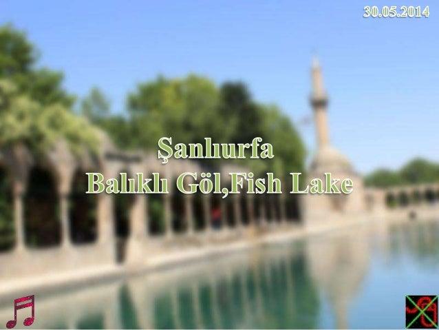 Şanlıurfa - Balıklı Göl,Fish Lake