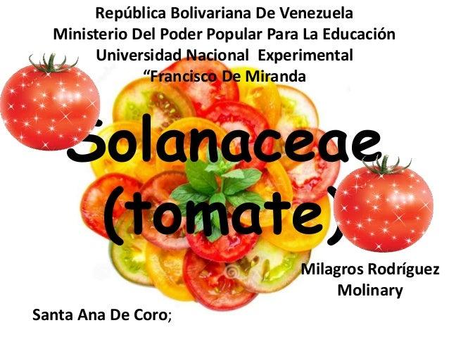 Solanaceae (tomate) República Bolivariana De Venezuela Ministerio Del Poder Popular Para La Educación Universidad Nacional...