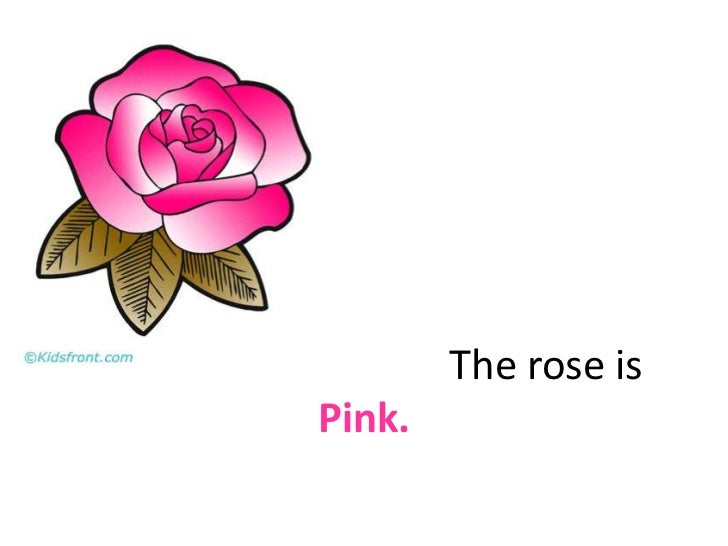 The rose is Pink.<br />