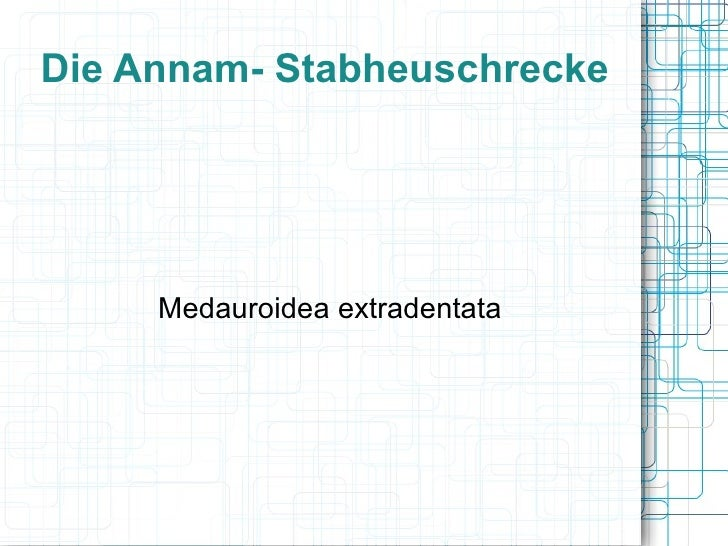 Die Annam- Stabheuschrecke Medauroidea extradentata