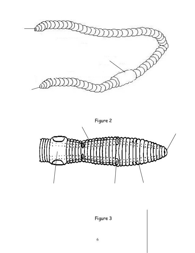 Simple Earthworm Diagram To Label - Online Schematic Diagram •