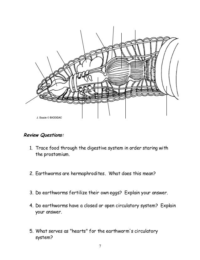 Biodidac Earthworm Internal Diagram - Online Schematic Diagram •