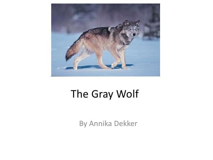 The Gray Wolf<br />By Annika Dekker<br />