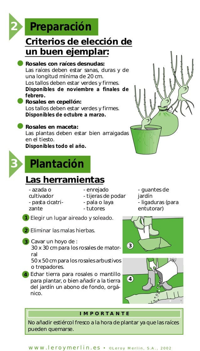 Anon plantar cuidar y podar rosales - Rosales en macetas ...