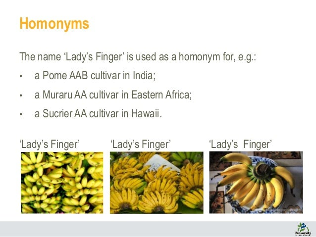 An Online Checklist Of Banana Cultivars