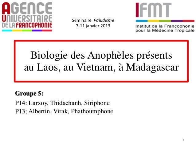 Biologie des Anophèles présentsau Laos, au Vietnam, à MadagascarGroupe 5:P14: Larxoy, Thidachanh, SiriphoneP13: Albertin, ...