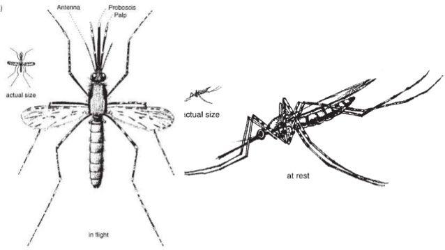 Malaria I Jej Pogromcy border=