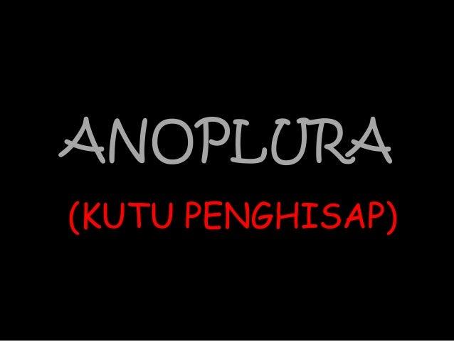 ANOPLURA(KUTU PENGHISAP)