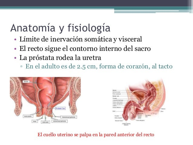 Exploracion fisica: Ano, recto y prostata