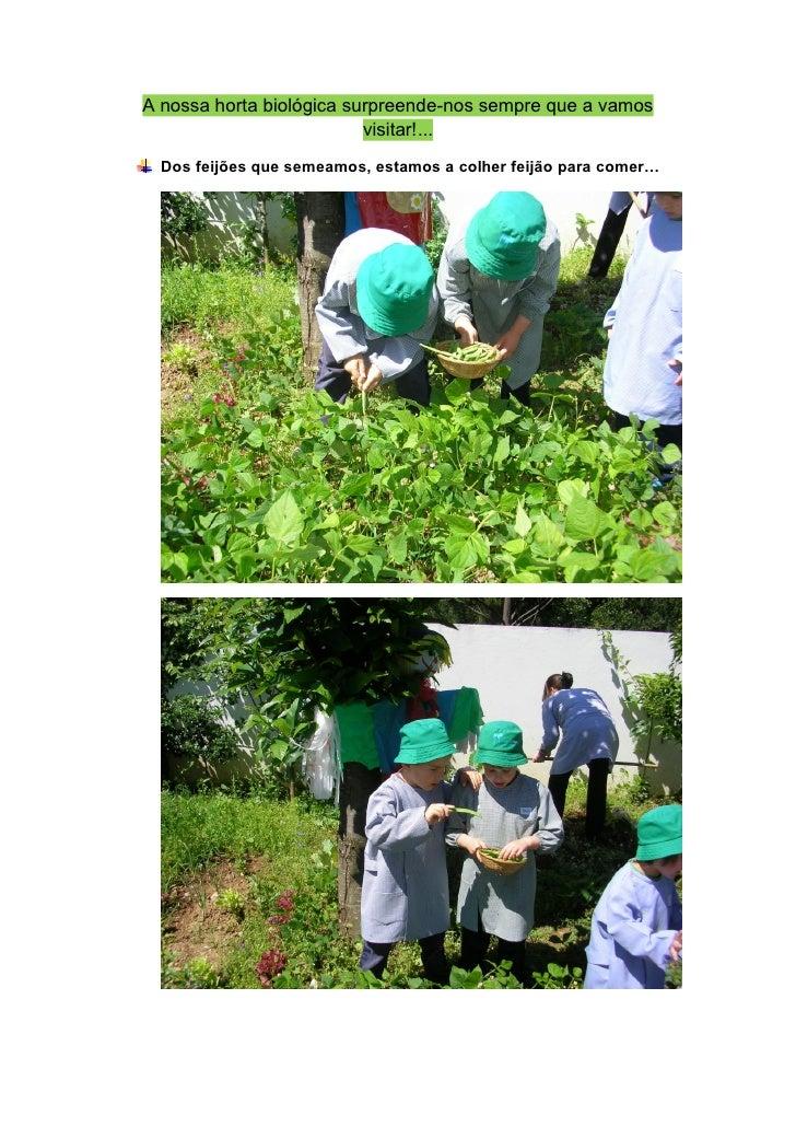 A nossa horta biológica surpreende-nos sempre que a vamos                          visitar!...  Dos feijões que semeamos, ...