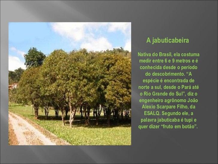"""A jabuticabeira  Nativa do Brasil, ela costuma medir entre 6 e 9 metros e é conhecida desde o período do descobrimento. """"A..."""