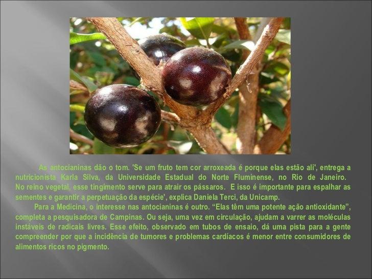 As antocianinas dão o tom. 'Se um fruto tem cor arroxeada é porque elas estão ali', entrega a nutricionista Karla Silva, d...