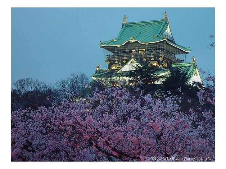 Anotimpul ciresilor -Japonia Slide 3