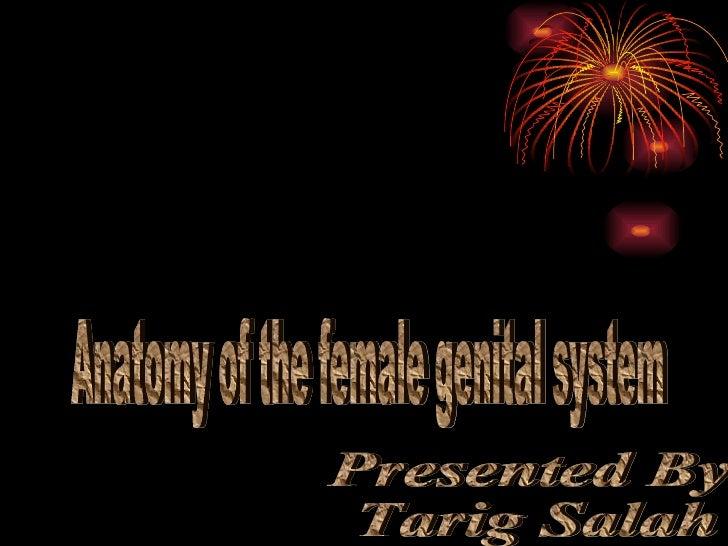 Anatomy of the female genital system Presented By Tarig Salah