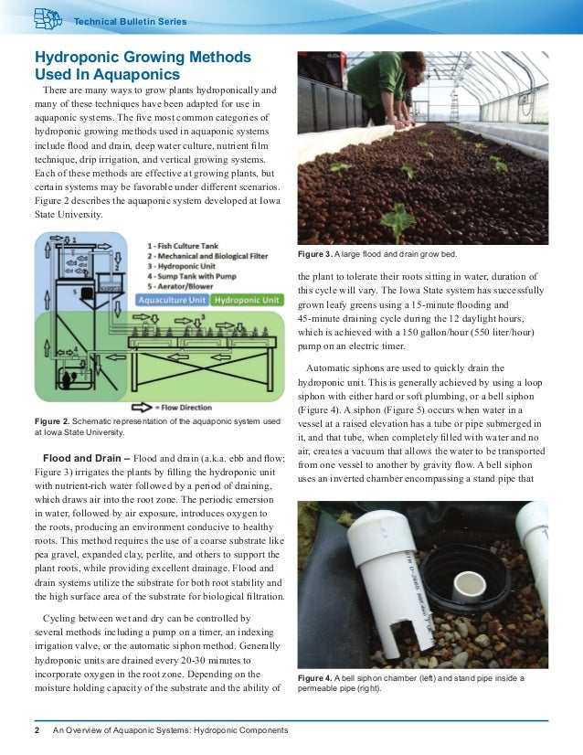 an overview of the hydroponics Hydroponic / greenhouse crops: overview the florida greenhouse vegetable  industry in 2004 was comprised of approximately 80 acres of crop production.