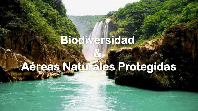 Biodiversidad y areas naturales protegidas - Ambientadores naturales para la casa ...