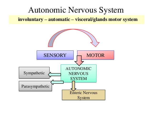 nervous system research paper In this lesson we'll learn the definition of 'autonomic nervous system' clinical research: ugc net psychology paper ii: exam prep.