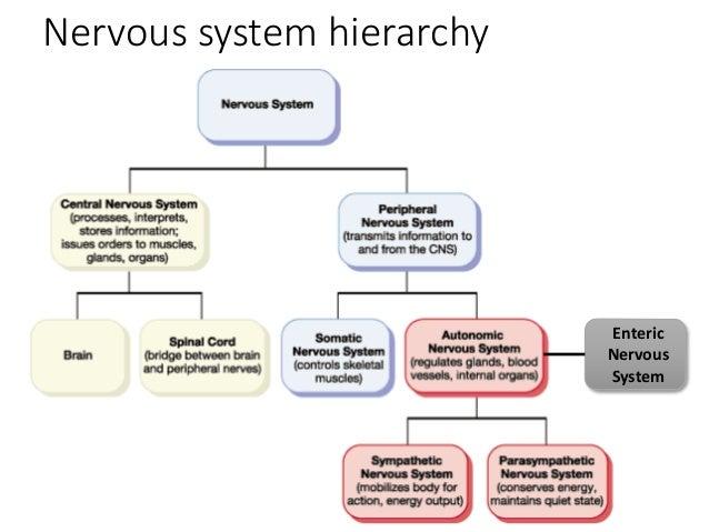 Autonomic Nervous Sytem
