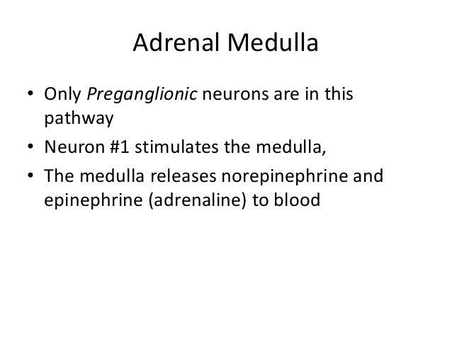 Autonomic nervous system anatomya and its testing