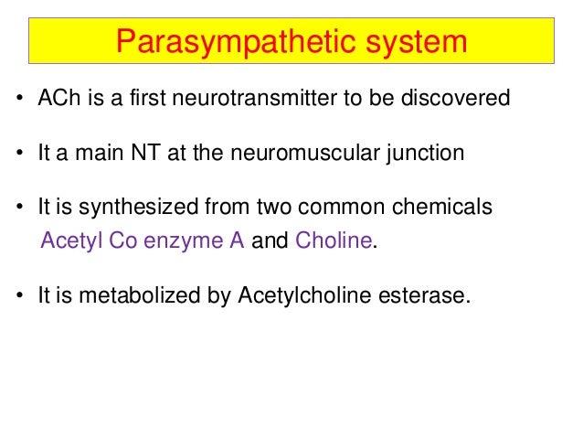 Ans (parasympathetic)