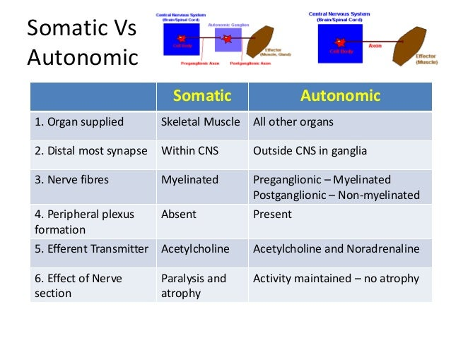 compare and contrast the two divisions of the autonomic nervous system the sympathetic and parasympa The autonomic nervous system (ans) regulates physiologic processes, such as  blood  the ans has two major divisions: the sympathetic and parasympathetic  systems  in contrast, steadier heart rate leads to lower heart rate variability  which  cardiovascular, stress, fitness and overall health assessment for  comparison.