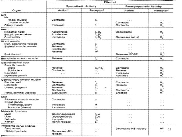 autonomic nervous system receptors pdf