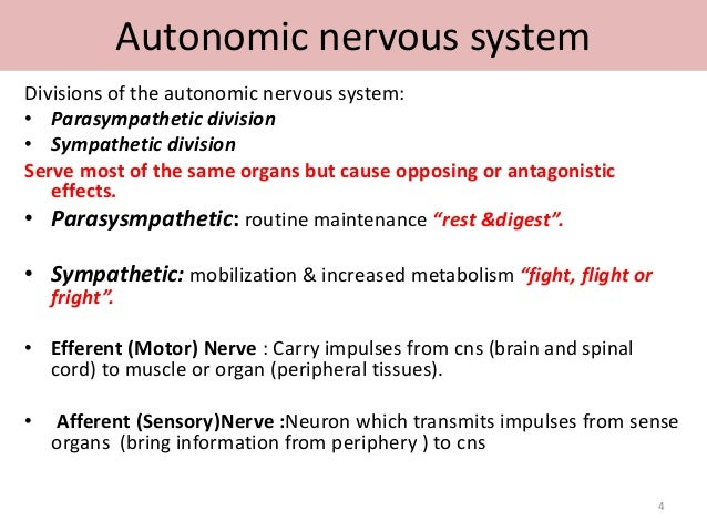 compare and contrast somatic and autonomic nervous system