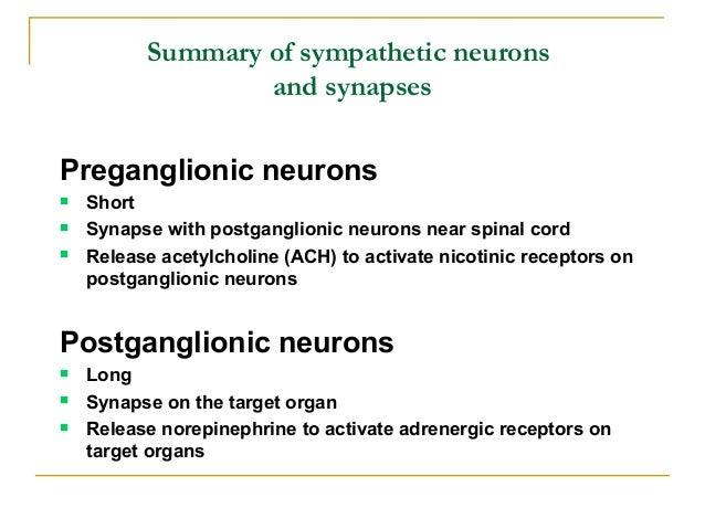 " Sweat glands:» Postganglionic neuronsinvolved with stress-relatedexcretion releasenorepinephrine (""sweatypalms"")» Postga..."