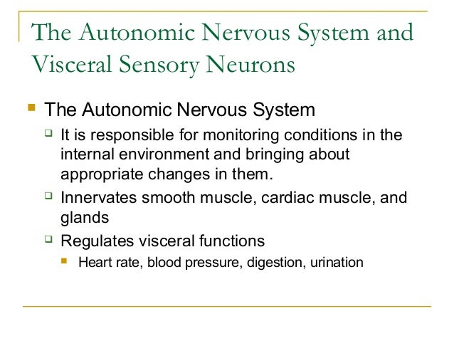 The Autonomic Nervous System andVisceral Sensory Neurons The Autonomic Nervous System It is responsible for monitoring c...