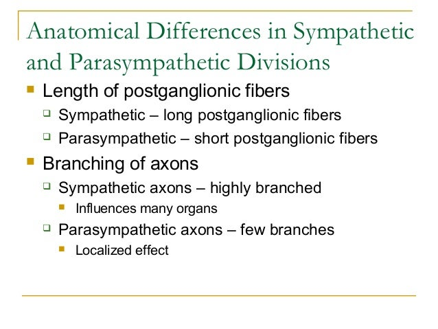 Anatomical Differences in Sympatheticand Parasympathetic Divisions Length of postganglionic fibers Sympathetic – long po...