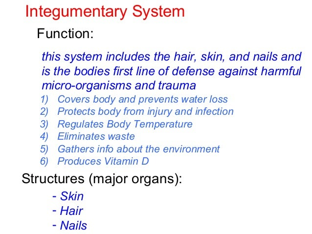 Human Body Systems Test Review