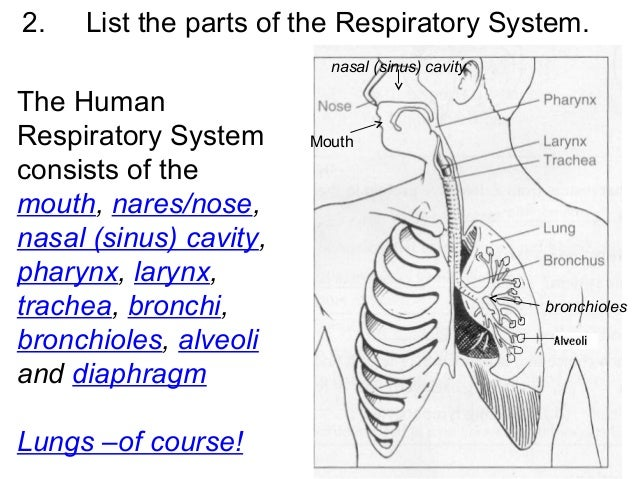 Human body systems test review 3 2 ccuart Images