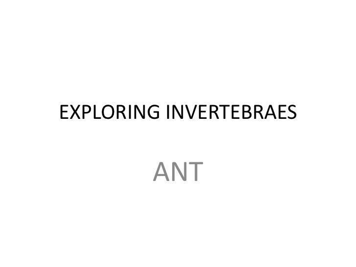 EXPLORING INVERTEBRAES        ANT