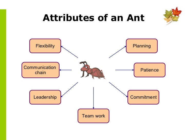characteristics of ants Some characteristics of ants are that they are social insects, and that they come in shades of black, brown, or red another characteristic is that they have bodies that are divided into three.
