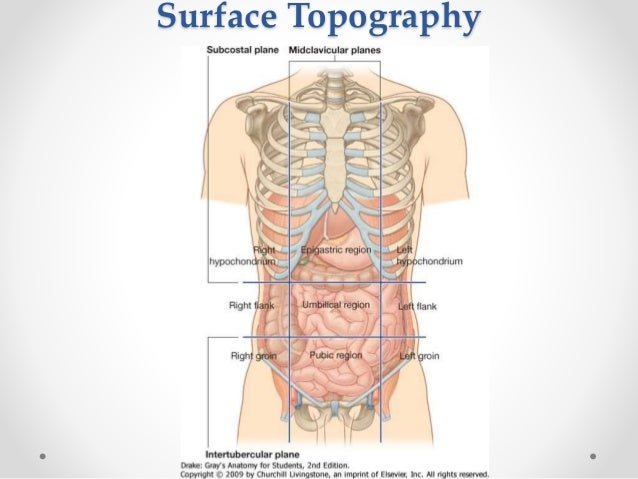 Surgical anatomy of anterior abdominal wall ccuart Image collections