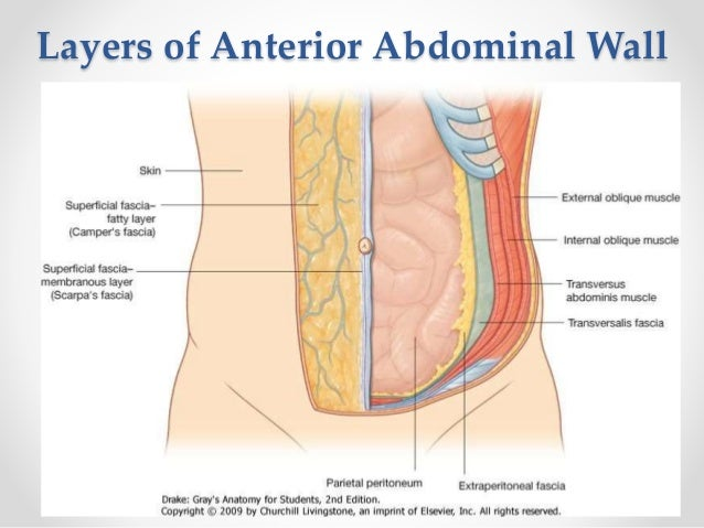 Surgery of the Abdominal Wall